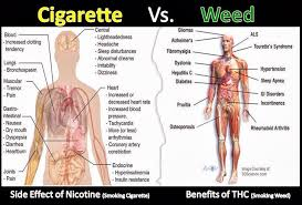 Cigarettes Vs Weed Chart Pin En Health Wellness