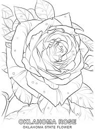 Small Picture Oklahoma State Flower coloring page Free Printable Coloring Pages