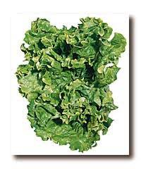 Lettuce Types Chart Lettuce Vegetable Directory Watch Your Garden Grow