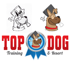 Image result for images of top dog training resort