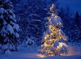 Outside Christmas Lights Christmas Tree Lights Outside Happy Holidays
