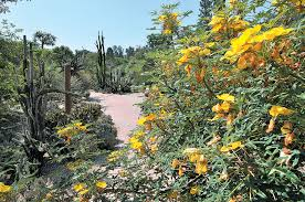 los angeles county arboretum botanic garden having previously worked at more from this author yellow