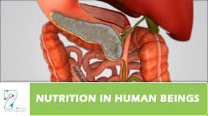 Human Nutritional Needs Chart Nutrition In Human Beings