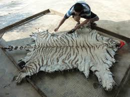 real tiger skin rug with head furniture