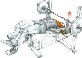 Decline Barbell Bench Press  Chest Exercise  YouTubeDecline Barbell Bench