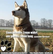 Hunde Sprüche Weitere Hunde Sprüche Googlefe8ff Facebook