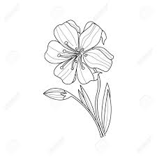 マリーゴールド花モノクロ図面帳手描きベクトル シンプルなスタイルのイラストを着色するため