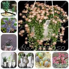 2019 mixed succulent seeds bonsai cactus plant of home garden decoration flowers seeds rare sempervivum orquideas para planta from ymhzpy 1 01 dhgate