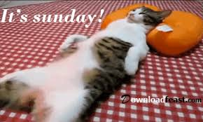 Image result for have a great sunday amusing cat gifs