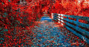 River In Autumn Wallpapers - Wallpaper Cave