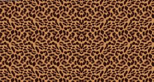 Leopard Print Bedroom Wallpaper Leopard Wallpaper Wallpapersafari