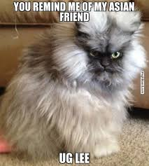 YOU REMIND ME OF MY ASIAN FRIEND UG LEE - Pissed off cat ... via Relatably.com