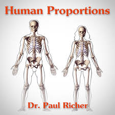 Human Proportions Chart Human Figure Proportions Average Figures Dr Paul Richer