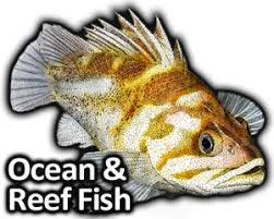 coral reef fish drawing. Exellent Fish Illustrations Of Open Ocean And Coral Reef Fish Accurate Drawings  To Coral Reef Fish Drawing H