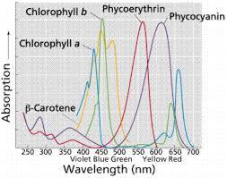 Action Spectrum Photosynthesis