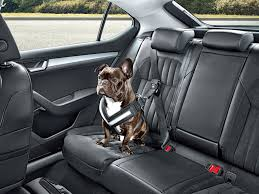 skoda launches seatbelt for dogs and other practical accessories