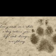 Dog Passing Quotes Custom 48 Dog Death Quotes On Pinterest Dog Loss Quotes Golden 48