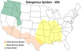 Anyone know how to get rid of Wolf Spiders - Page 2 - LS1GTO.com ...
