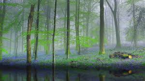 2k Background Download Nature Forest Trees Fog Reflection Water Flowers