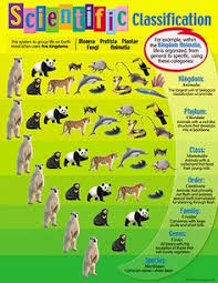 33 Best Classification Of Living Things Images Teaching