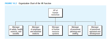 Solved Examine The Placement Of The Manager Of Hr Systems