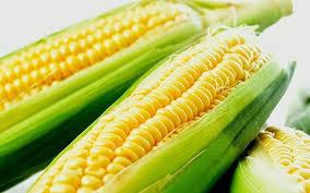Resultado de imagem para espiga de milho verde