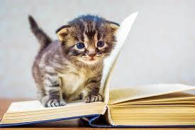 Kitten Socialization Chart Kitten Classes The Cats Meow Veterinary Practice News