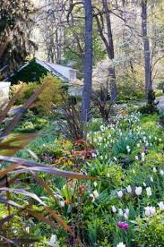 Small Picture 76 best Woodland images on Pinterest Garden plants Shrubs and