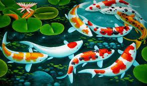 Koi Fish Wallpaper Hd Desktop