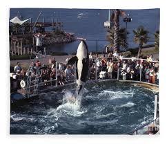 original shamu. Delighful Shamu Original Fleece Blanket Featuring The Photograph The Shamu Orca  Sea World San Diego 1967 By On