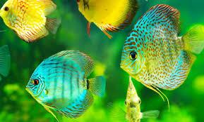 Aquarien Beleuchtung Leicht Gemacht