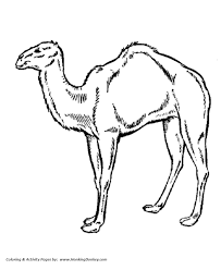 Small Picture Wild Animal Coloring Pages Arabian Camel Coloring Page and Kids