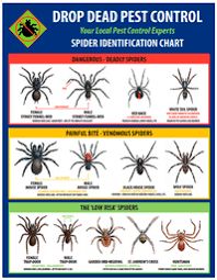 Spider Identification Chart Australia Spiders In Florida Chart Insect And Spider