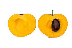 "Image result for fruit ""org"""