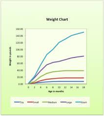 Presa Canario Puppy Weight Chart Dogsblog