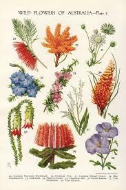 Vintage Floral Print 25 Best Botanical Flowers Ideas On Pinterest Botanical Drawings