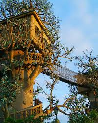 Exotic Tree Houses Architecture Exotic Log Spiral Staircase Around Tree With