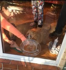 small dog door into glass door