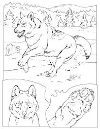 Coloring Book Animals A To I Värityskuvia Wolf Colors Animal
