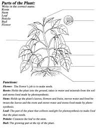 also  also Plant Reproduction Worksheet Pack by beckystoke   Teaching further Plant Structure and Function Exam by Lisa Michalek   TpT likewise PLB 102   Lab 1 additionally Plant Cell Structure   AS Biology additionally Parts of a plant cell   Science vocabulary worksheet   Science besides Cell Structure and Function Worksheet for 7th   10th Grade also Learnhive   ICSE Grade 6 Biology Structure and Functions of a in addition Plant Structure and Function Notes Outline Lesson Plan by Lisa moreover Subjects Plant Structure And Function Worksheet High School. on plant structure and function worksheet