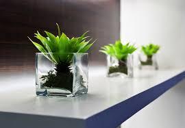 decorative plants for office. Office Desk Decoration Plants Plant On Decorative Planters For Fresh Home 1938 X C