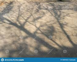 Tree Shadow Light Shade Shadow Of The Tree On The Ground Stock Photo Image Of Soil
