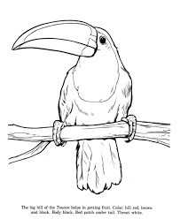 Small Picture Animal Drawings Coloring Pages Toucan bird identification