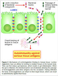 Correlation Of Tissue Antibodies And Food Immune Reactivity