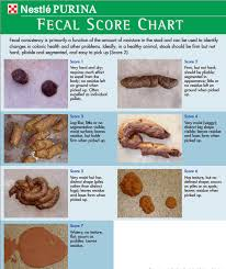 Fecal Scoring Chart They Call Me Poop Obsessed Pet Health And Life