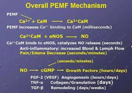 Pemf Therapy And Nitric Oxide Production The Power To