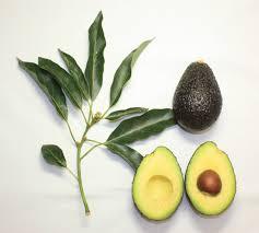 Afbeeldingsresultaat voor avocado