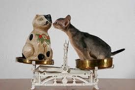 Lustige Katzenbilder Mit Witzigen Sprüchen Die Tierexperten