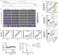 Erythrocyte Leveraged Chemotherapy Elect Nanoparticle
