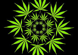 research cannabis effects
